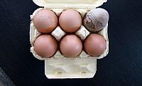 Megérkezett a tojás