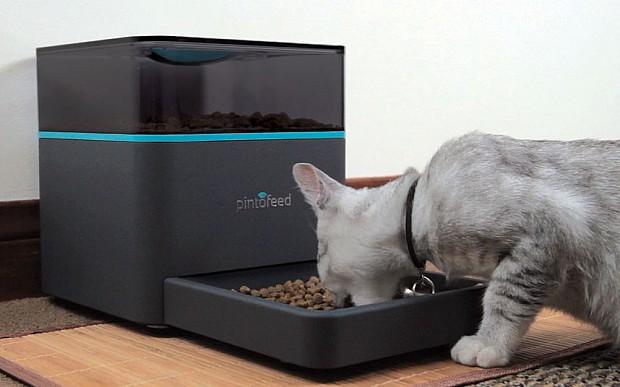 cat-feeder-iphone_2442798k