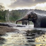 elefant_utomunka