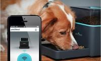 Kutya- és macskaetetés érintőképernyőről