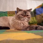 S6-tesztfoto-belter-00-grumpy-cat