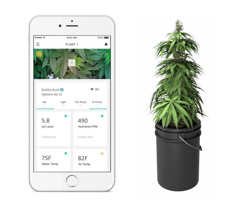 marihuana-termesztes-otthon-hazilag_leaf_06