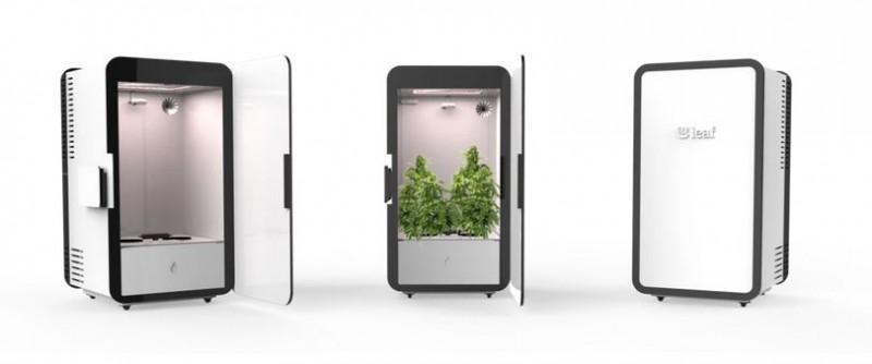 marihuana-termesztes-otthon-hazilag_leaf_11