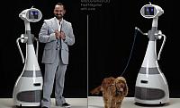 Robotlakájt minden háztartásba – RoboDynamics Luna