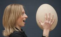 10 milliót ér David Attenborough 30 cm-es elefántmadár tojása