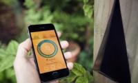Szénanátha-app szimatolja a pollenszintet