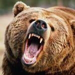 medve-tamadas